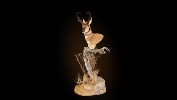 antelope-key