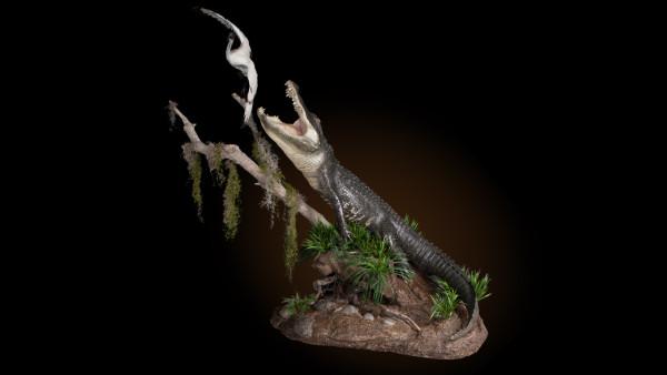 alligator-key