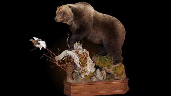 bear-key